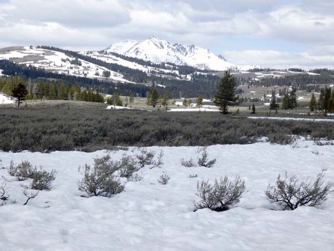 Late Spring, Yellowstone has just opened for the season and there is still plenty of snow